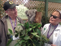 Photo of NCRF Major Gifts donors: A man and a woman dressed as tourists are up close and personal with a koala in a tree